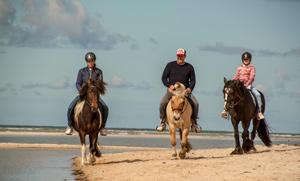 Videodreh mit Brian Bojsen und unseren Pferden