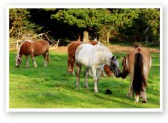 Pferdepension auf Römö
